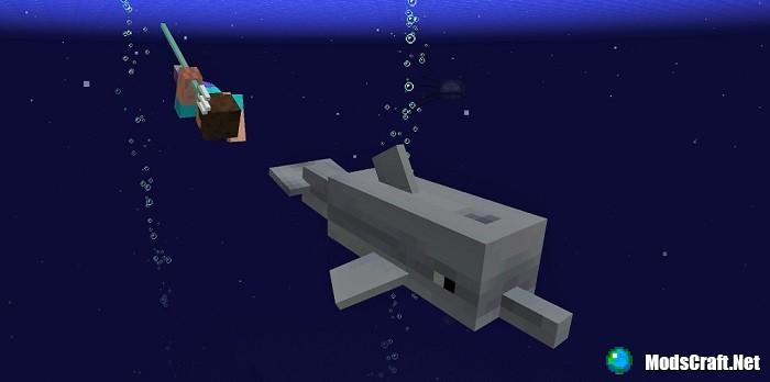 Первая демонстрация дельфинов!